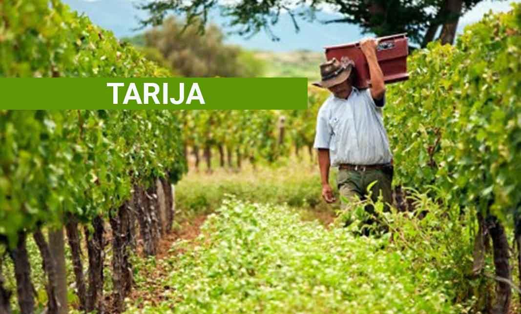 Tours in Tarija - Wine Tours
