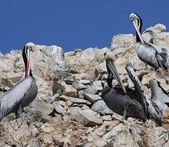 Paracas National Reserve & Ballestas Islands Full Day - Paracas
