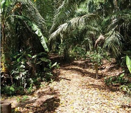 4-Day Jungle Tour (Superior Lodge) - Puerto Maldonado