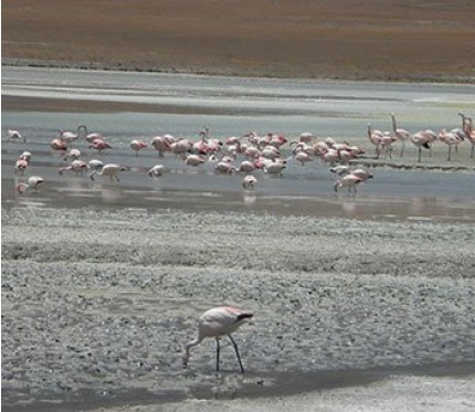 Salar de Uyuni - Salt Flats Tours Bolivia - Budget Standard Plus Uyuni