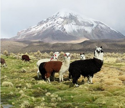 Sajama National Park 3-Day Tour