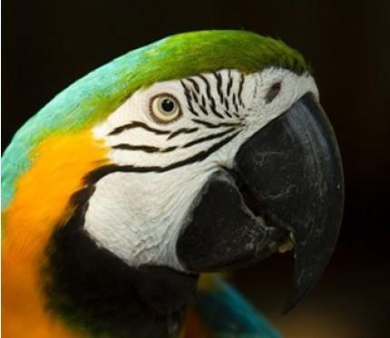 Amazon Planet Jungle Tour 5 Days (from Puerto Maldonado)