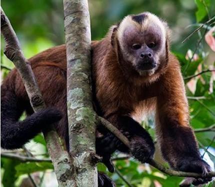 3-Day Jungle Tour (Superior Lodge) - Puerto Maldonado