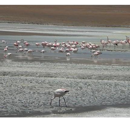 Uyuni Salt Flats Tour (Standard Plus) - 3 Days + Transfer to Chile
