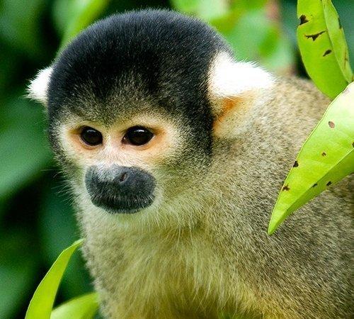 Madidi Jungle Amazon Pampas Tours Bolivia